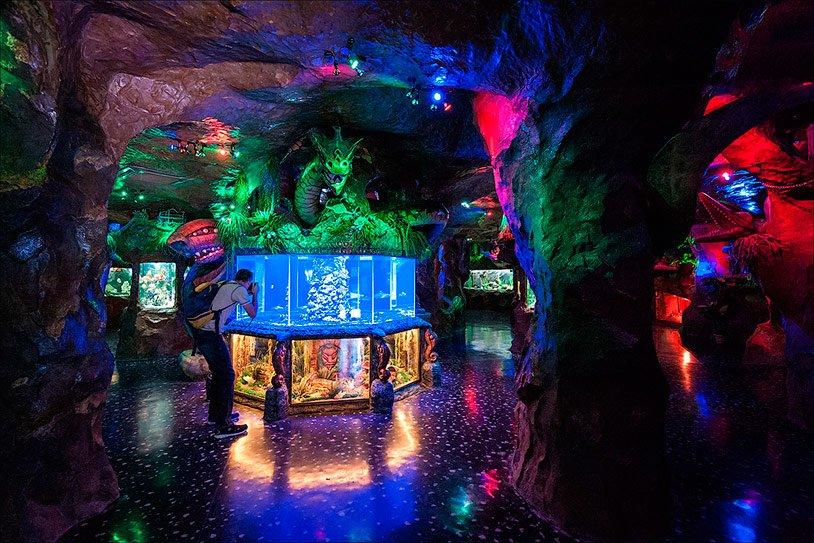 Лучший аквариум Крыма
