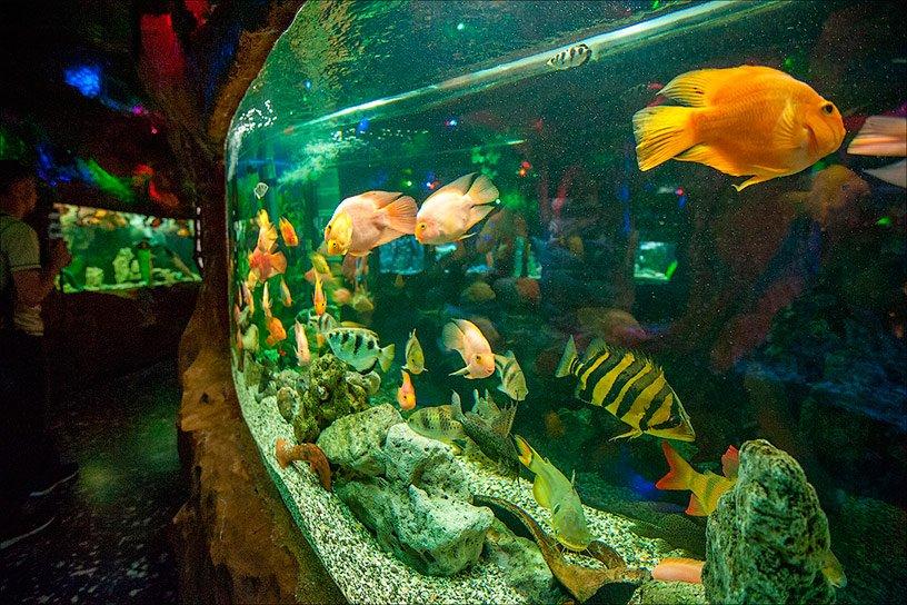Фото Евпаторийского аквариума