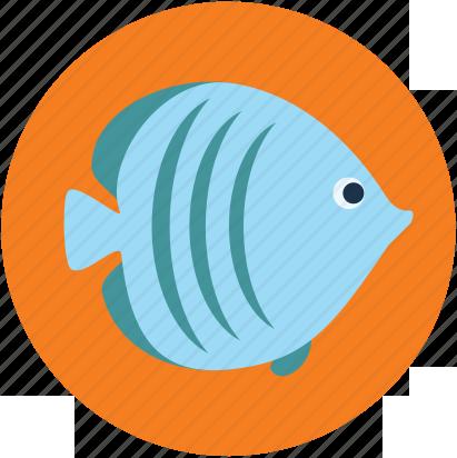 Рыбы Евпаторийского Аквариума