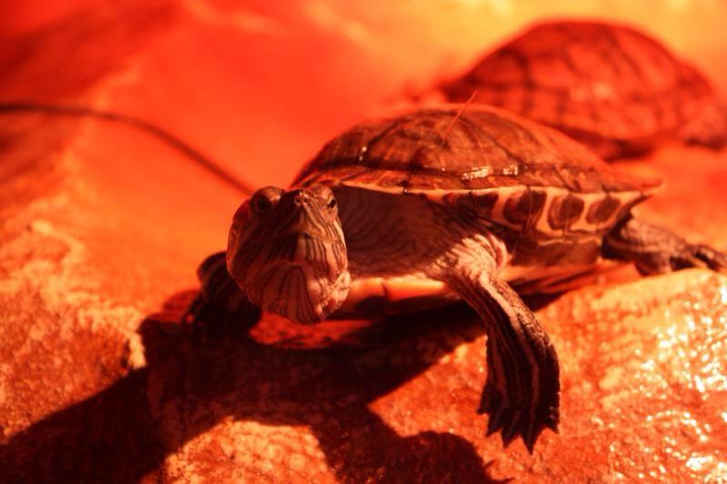 Черепаха в Евпаторийском Аквариуме