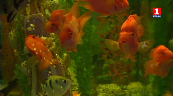 Video of the aquarium of Evpatoria