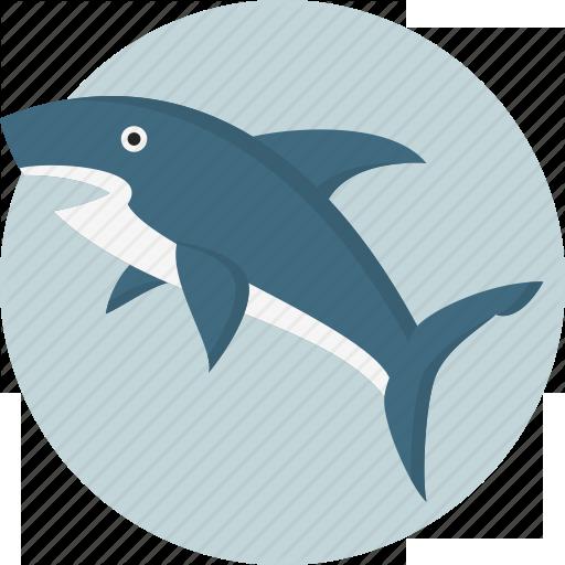 Акулы Евпаторийского Аквариума